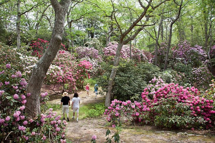 Heritage Museums & Gardens in Sandwich, MA covers 100