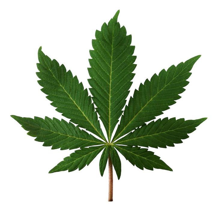 Sulla marijuana se ne sentono dire di tutti i colori: un giorno additata come uno dei peggiori mali dell'umanità, il giorno dopo, proclamata soluzione univ