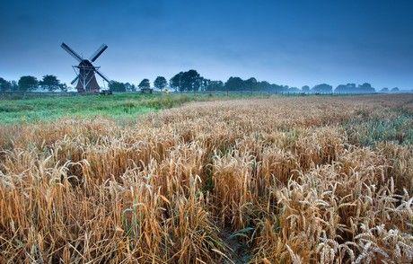 De Provincie Groningen wil het aantal hectare met biologische landbouw vergroten. De omschakeling van reguliere naar biologische landbouw vraagt om kennis en kunde die voor sommige boeren nog te.....