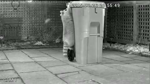 #BINWARFARE #SWD #GREEN2STAY 'Defeat is not an option,' Mayor John Tory says of 'raccoon-proof' green bin  New, larger bins to be rolled out in 2016 feature a dial latch that raccoon paws can't