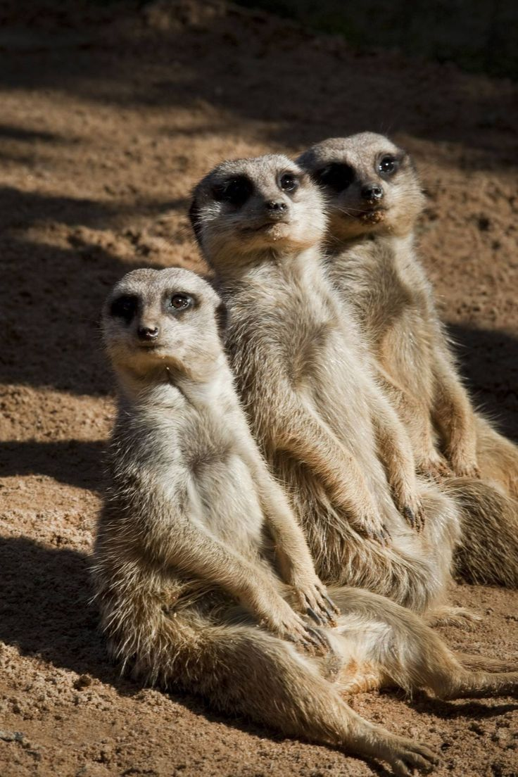 1426 Best Animal Beauty Images On Pinterest