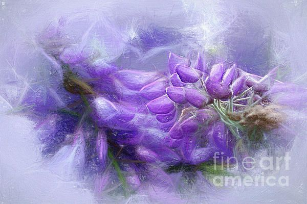 #Mystical #Wisteria by #Kaye_Menner#Photography Quality Prints Cards Products at: http://kaye-menner.pixels.com/featured/mystical-wisteria-by-kaye-menner-kaye-menner.html