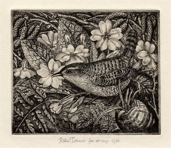 Wren and Primroses by Robin Tanner