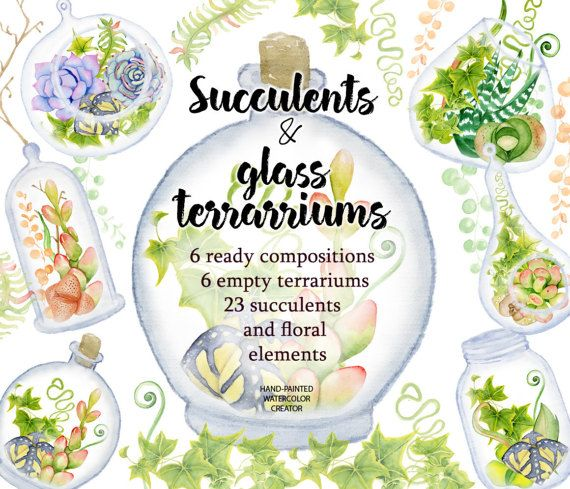 Watercolor Succulents and cactus glass terrariums. Cactus clipart. Hand painted clipart, succulents clip art. Instant download.