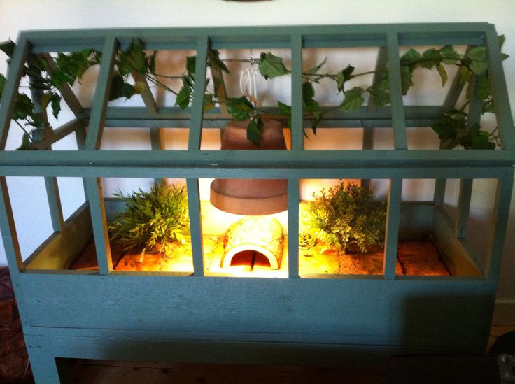 Homemade turtoise habitat