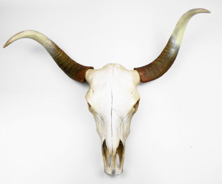 NEW - Life Size Cow Skull, Faux Cow Skull, Painted Cow Skull, Cow Skull, BoHo Decor, Animal Skull, Faux Taxidermy, Skull, Painted Skull, by hodihomedecor on Etsy