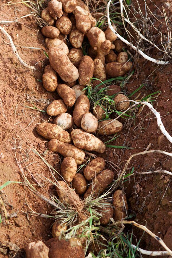 Prince Edward Island | PEI Potatoes