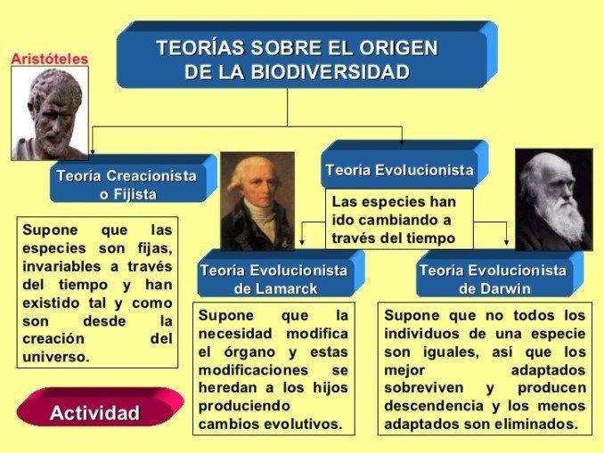 Cuadros Comparativos Sobre Las Teorías Del Origen Del Vida Cuadros Comparativos Teoría De Darwin Teoria Evolutiva Teoría