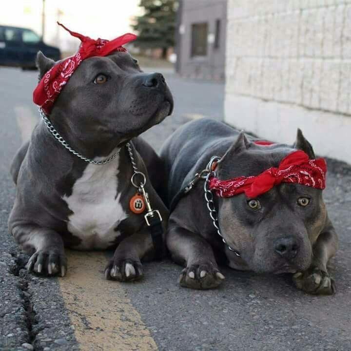 Brotherhood Bully