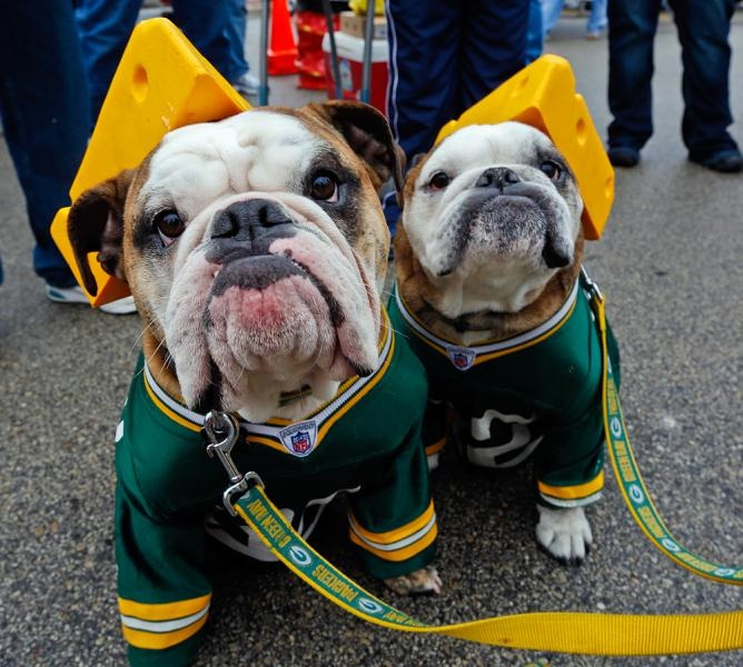 Green Bay Packers dogs fans