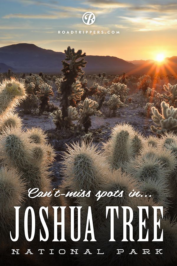 In our opinion, Joshua Tree has them all beat as the quirkiest and most eccentric park in the system. Get ready to do a lot of exploring, because we've rounded up the coolest of park's best-kept secrets.
