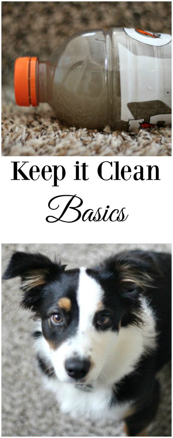 Pets and kids got you worried about how clean your carpets truly are? Don't worry. I have some keep it clean basics for you! #ad