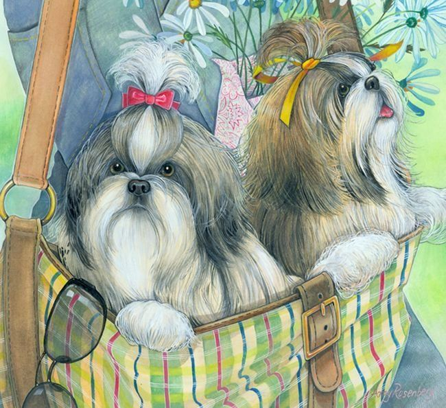 Amy Rosenberg Two Shih Tzu In The Bag