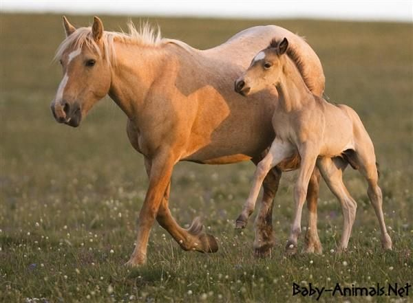 Cute horse pictures   #horse  #babyhorse  #cutehorse   #littlehorse   #sweethorse  #funnyhorse  #babyanimals  #cuteanimals  #sweetanimals  #funnyanimals