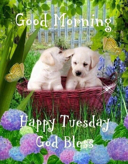 Good Morning Happy Tuesday God Bless Good Morning Tuesday Tuesday