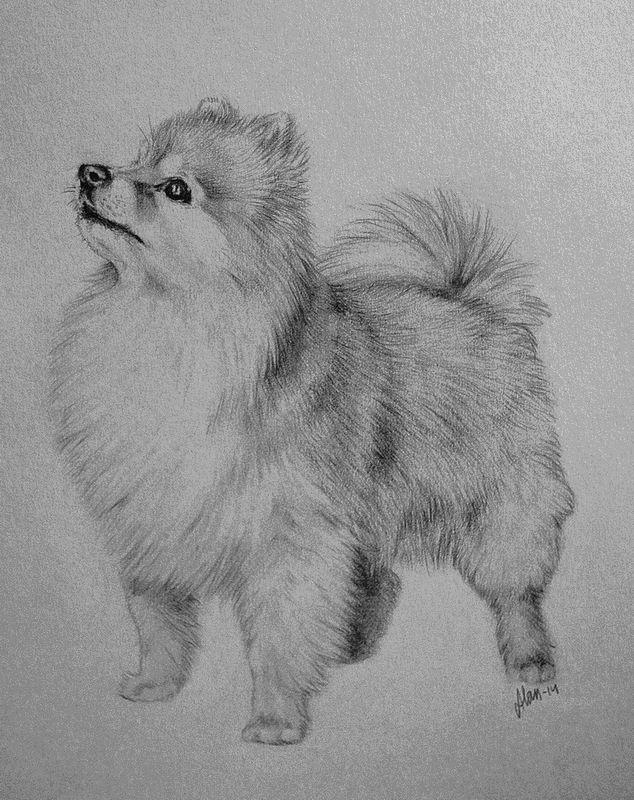 Pomeranian by AlanKK.deviantart.com on @DeviantArt