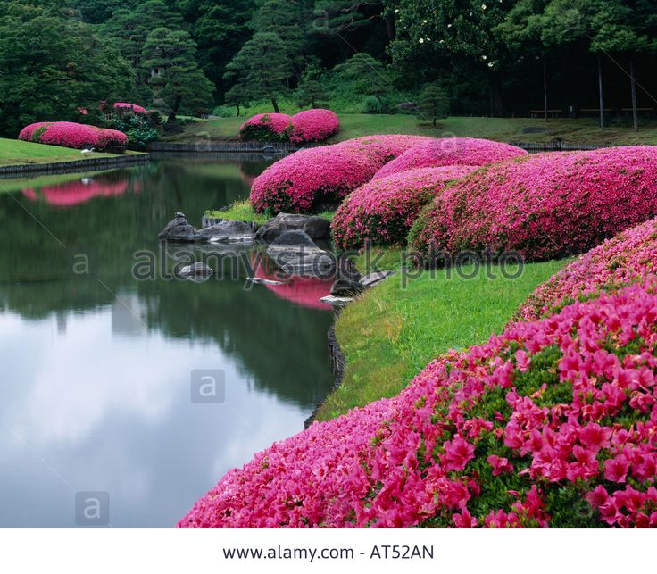 116 best azaleas japan gardens images on pinterest for Flowers for japanese gardens