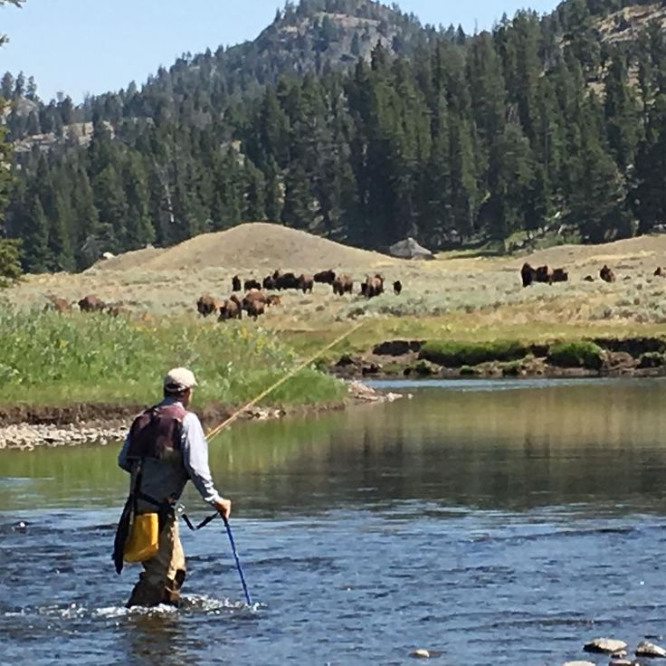25 best images about flyfishing on pinterest the smalls for Yellowstone national park fishing