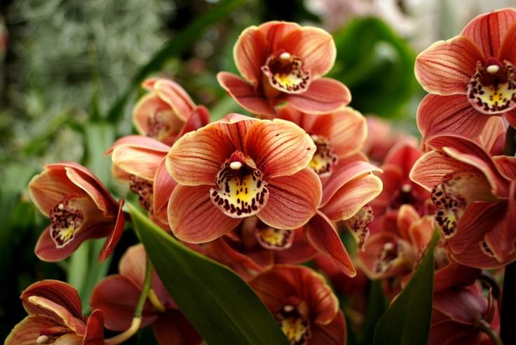 Orchideowe: McBeans Orchids (est.1879). 23/03/2013