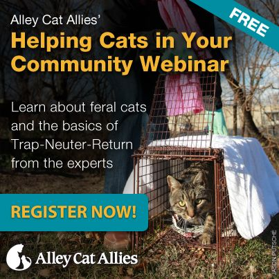 Learn the basics of Trap-Neuter-Return with our new Helping Cats in Your Community webinar. We've put together this resource for you to learn directly from our expert staff how you can improve cats' lives. In this 45-minute online demonstration, you'll learn about feral cats and how to do Trap-Neuter-Return yourself. If you register here you can still view the recording even if you missed the live webinar.