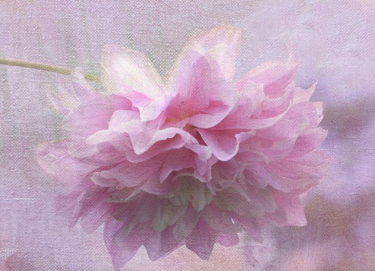 Фотографии цветов и натюрморты с текстурами от jennyw47. Обсуждение на LiveInternet - Российский Сервис Онлайн-Дневников
