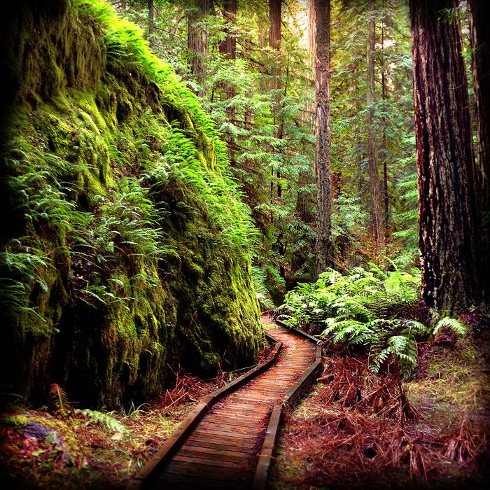 Montgomery Woods State Park I Wanna Go Pinterest