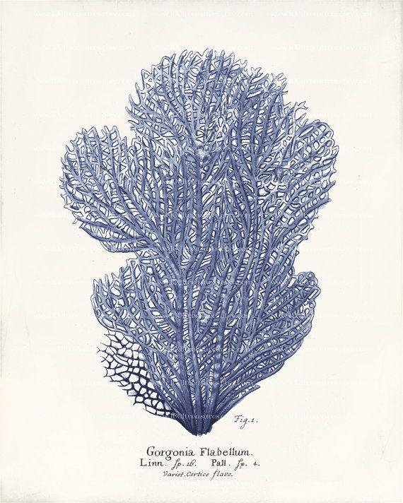 SPRING SALE - Antique Blue Coral Art Print - Natural ...