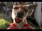 Anyone Know What Kangaroo Jack Has been Up To? (Where Are They Now) Bolly4u