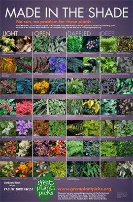 Shade garden plant picks