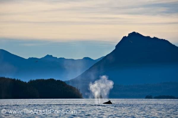 Humpback Whale off Northern Vancouver Island
