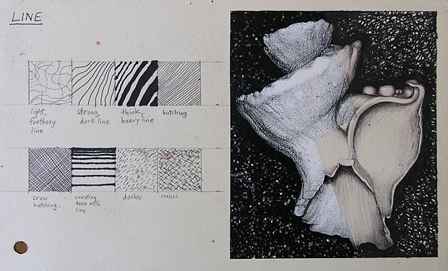 A small exercise that introduces students to drawing and rendering using line. This photocopy of a shell (made by lying a shell directly onto the photocopier) is then cut, with removed portions redrawn using black pen.