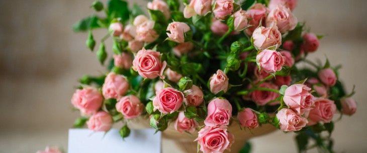 ミニバラの育て方!種まきと苗の鉢植え・地植え、寄せ植えの方法は? - horti 〜ホルティ〜