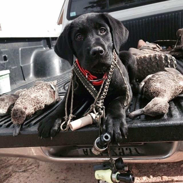 "** ""Whys yoo name me after a rifle? Whys yoo makes me ride home wif de morbid pile o' dead ducks?"""