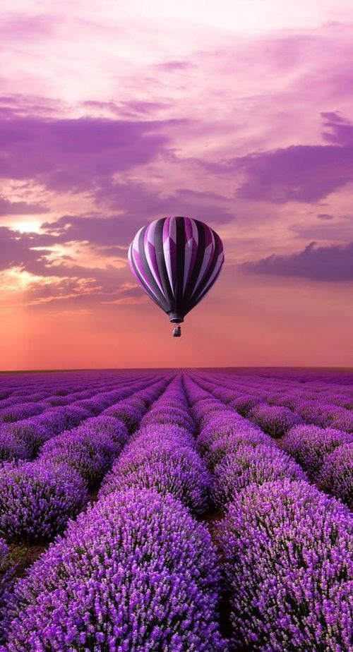 Hot Air Balloon over Lavender Field, France.. Take in the wonderful scent of the…My obsession with lavender will never end.... #naturephotography