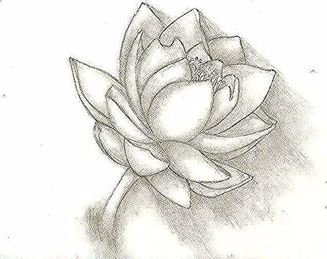 Paling Hits 30 Contoh Gambar Sketsa Bunga Teratai 39 Gambar Sketsa Bunga Indah Sakura Mawar Melati Download 16 Contoh Gambar S Floral Rings Floral Flowers