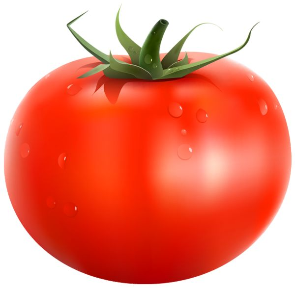 Tomato PNG Clipart Picture