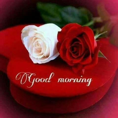 1034 best good morning images on pinterest bible verses - Good morning rose image ...
