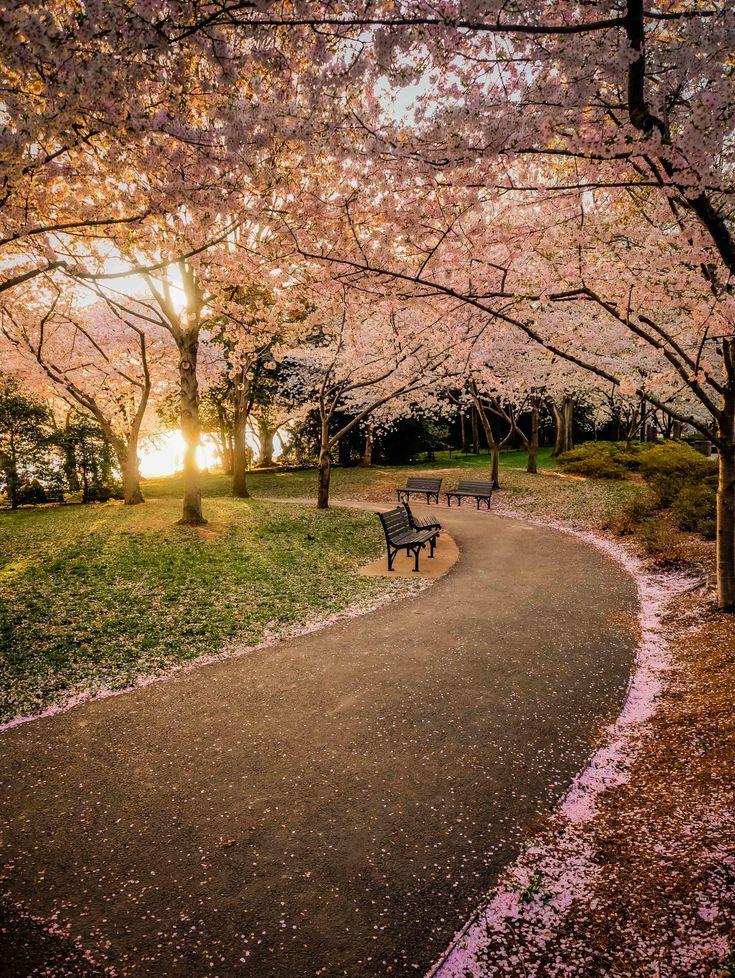 blossoms_35