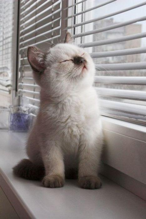 Cats (136 photos) (98)