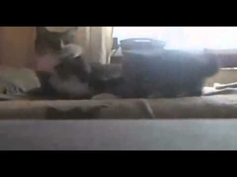 BEST Funny Videos 2014 Funny Cats Video Funny Cat Videos Ever Funny Animals Funny Fails 2014 2 - http://positivelifemagazine.com/best-funny-videos-2014-funny-cats-video-funny-cat-videos-ever-funny-animals-funny-fails-2014-2/ http://img.youtube.com/vi/X7y1HgGxtdU/0.jpg  حياة في البرية حياة الغابة حيوانات برية حيوانات متوحسة حيوانات لطيفة حيوانات أليفة نمور الأسد القط ناسيونا… Judy