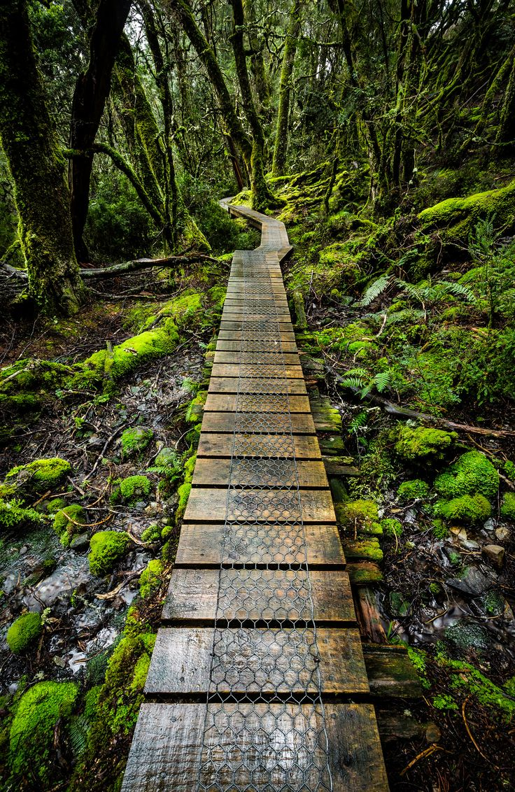 Enchanted Forest | Flickr - Photo Sharing!