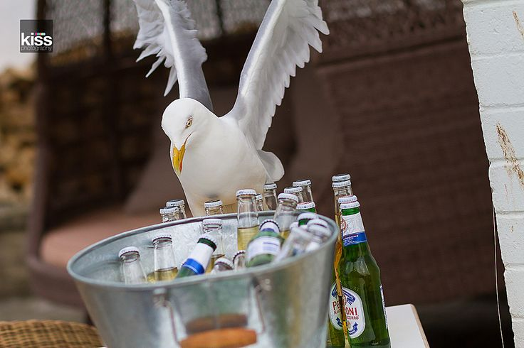 seagull kiss-wedding-photography-5325