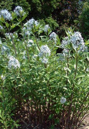 10 best images about low maintenance perennials on for Best low maintenance perennial plants