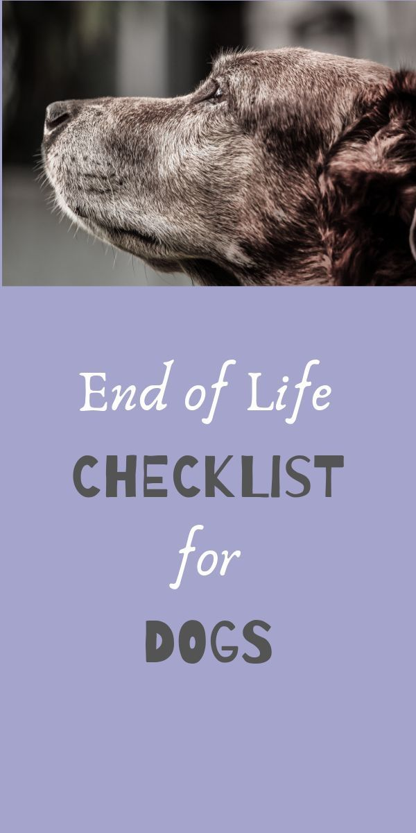 End Of Life Checklist Elderly Dogs Holistic Dog Natural Pet Care