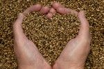 hemp-seeds-love-hands Can I get these here in US?