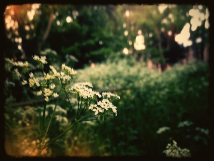 Garden of Eden by Marcus: The, Dreams, Gardens, Travel, Marcus