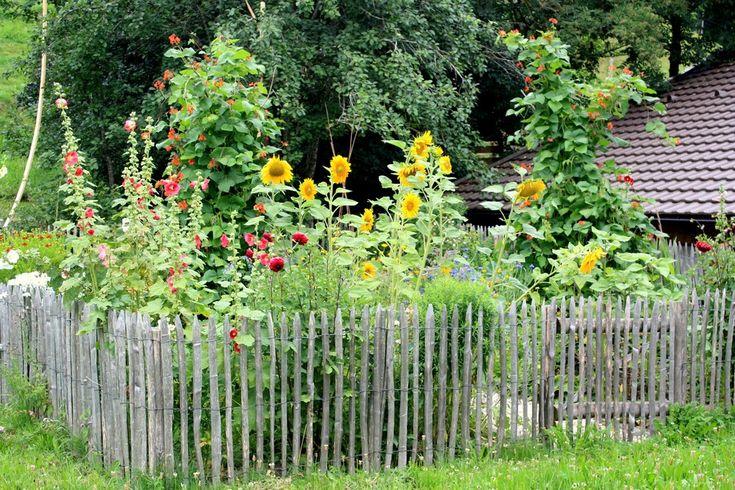 http://img.fotocommunity.com/Blueten-Kleinpflanzen/Stauden/Alter-Bauerngarten-a18122012.jpg