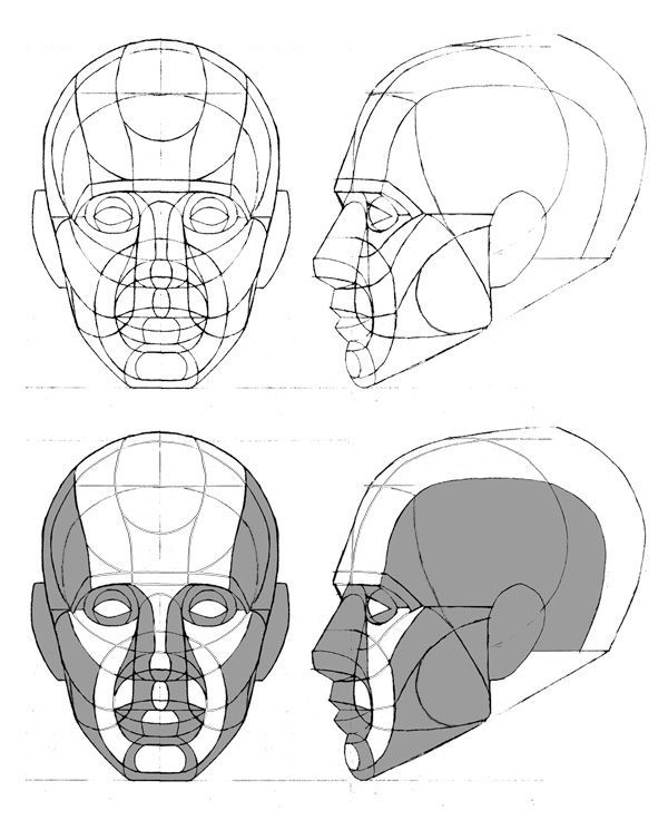 Image interface for human head drawing reference