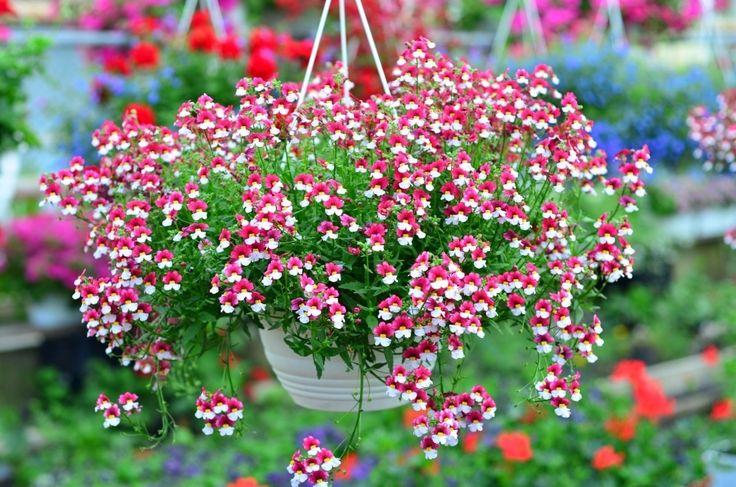 Kwiaty balkonowe Wrocław
