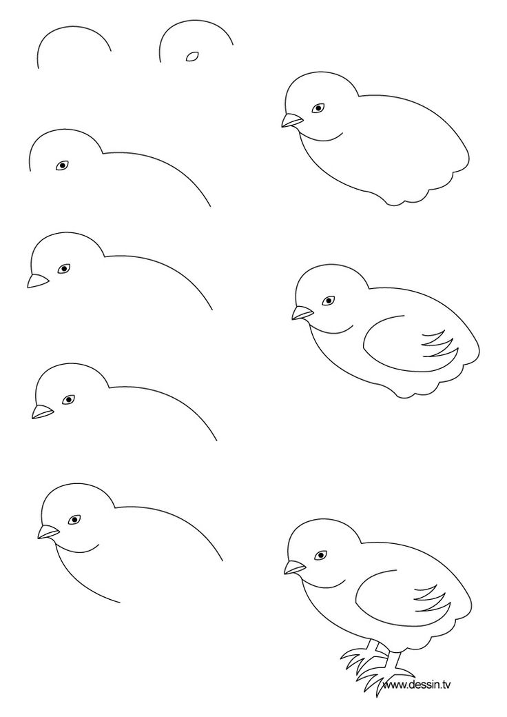 Drawing realistic Birds Step by Step | how to draw a chick with simple step by step instructions